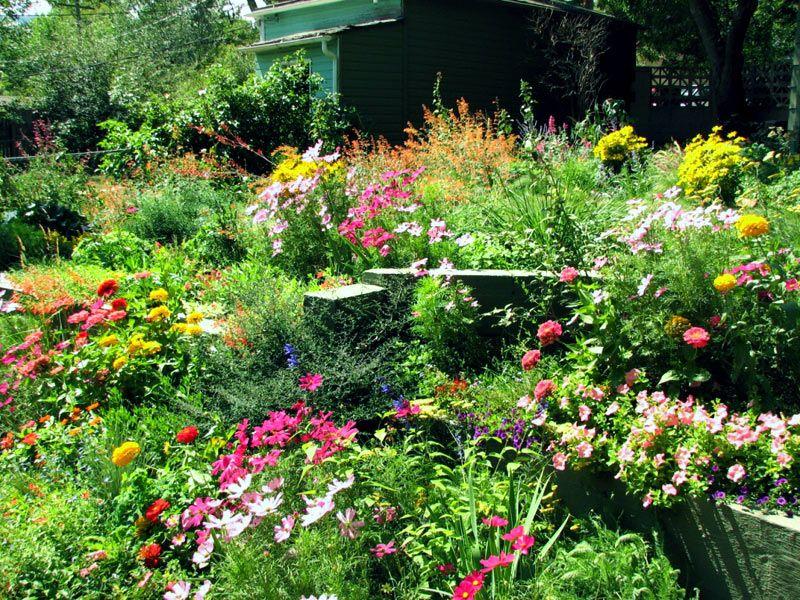 Virginia Wildflowers, Virginia Wildflowers, Landscape Pros | Landscape Design & Landscaping Services Manassas, VA