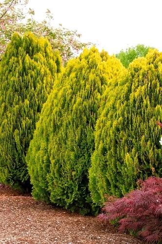 Plants & Trees, Plants & Trees, Landscape Pros | Landscape Design & Landscaping Services Manassas, VA