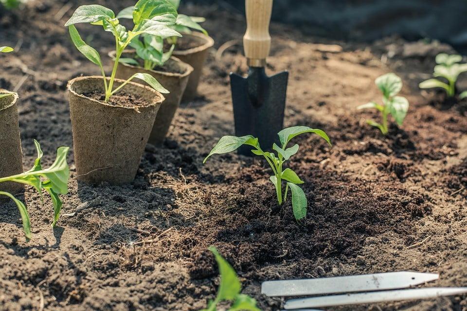 Rental Property Landscaping