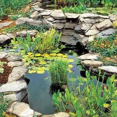 natural pond garden